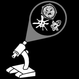 Bacteriologisch onderzoek illustratie